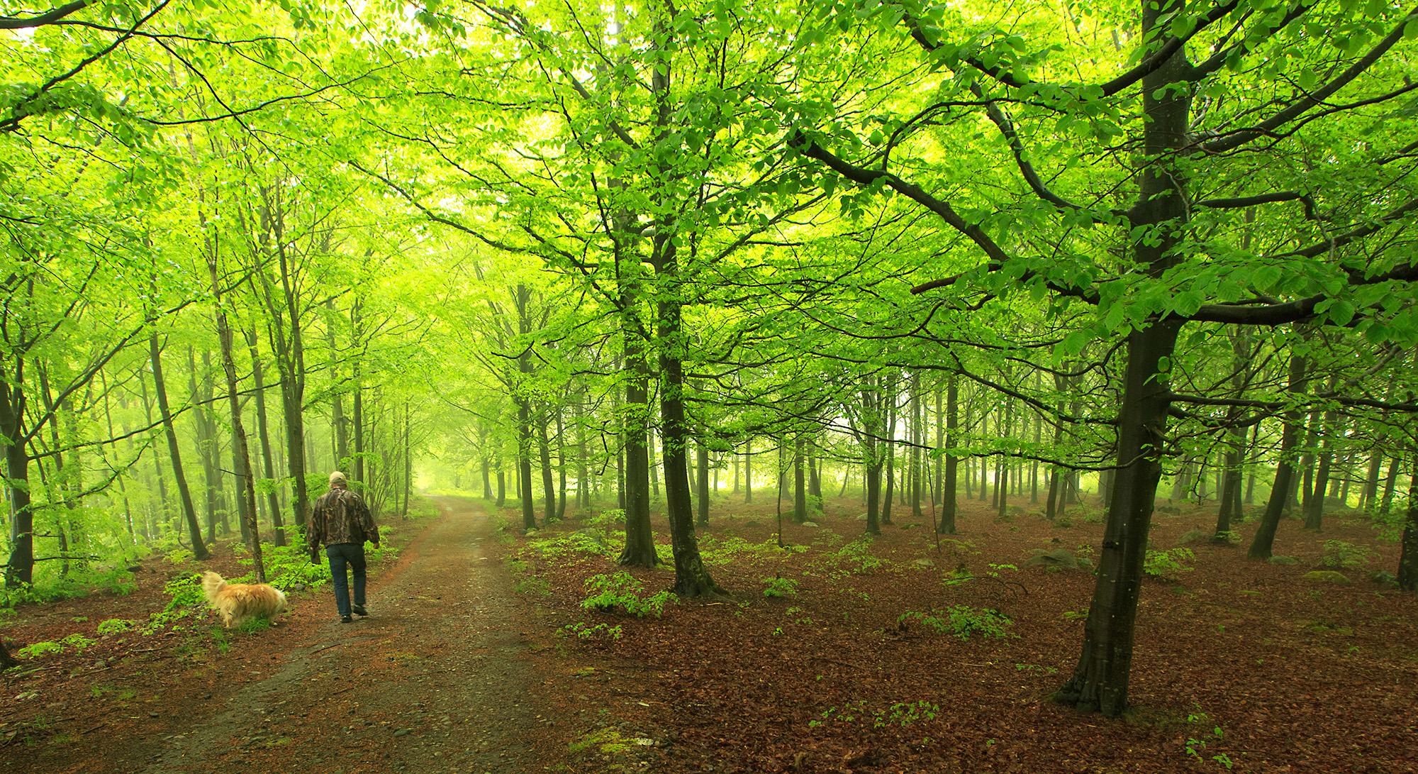 Bøkeskogen er helt sentral i Raet nasjonalpark i Grimstad, og velkomstsenteret fokuserer på hvilke vekstforhold endemorenen gir for varmekjære trær og planter og dyrking av grønnsaker og hagevekster.